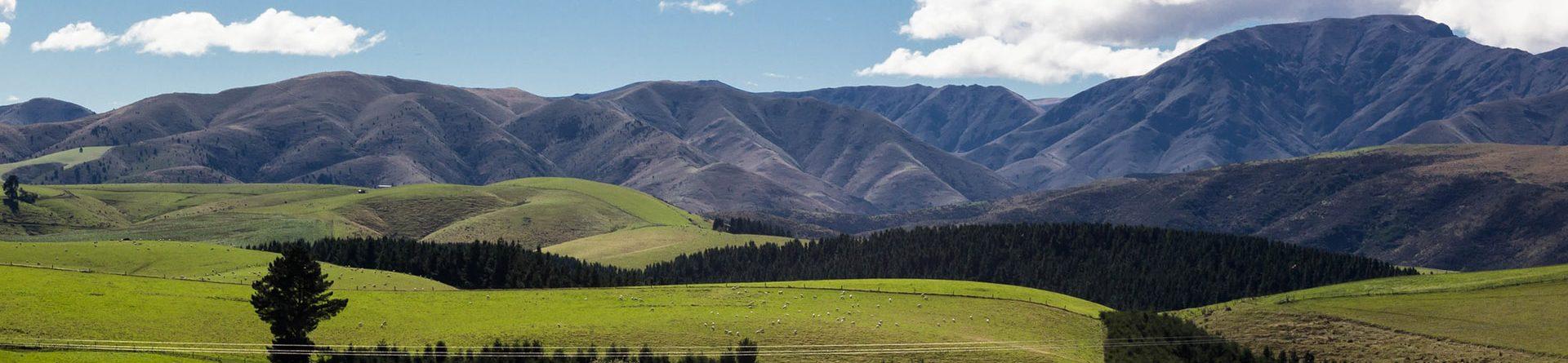 Жизнь в Новой Зеландии: плюсы и минусы